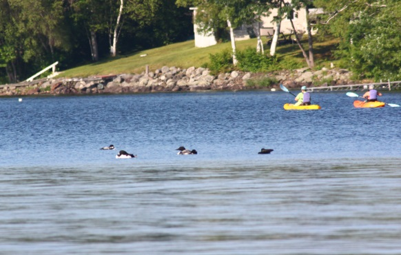 LOONS-AND-KAYAKS